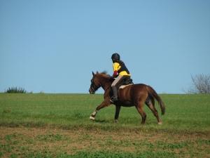 Neu! Prüfung zum Pferdeführerschein nach neuer APO, Herbst 2020