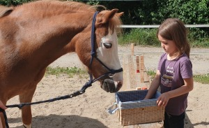 1. Kurs der ABC-Ponyschule erfolgreich abgeschlossen